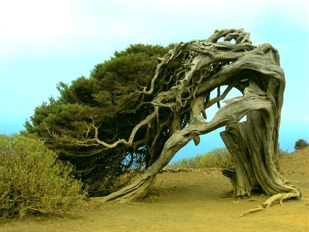 bizarre-tree-