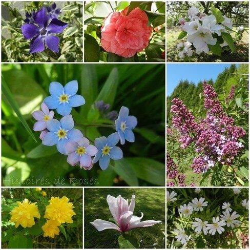 fleurs Nicole