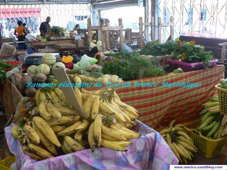 Plantain_Martinique_Jane_Mexique