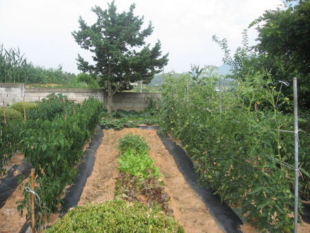 Nakdong_school_allotment