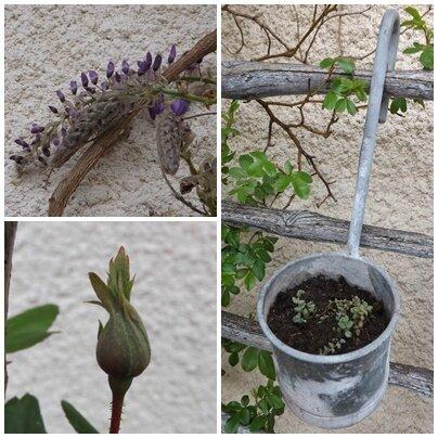 Jardin avril (8)