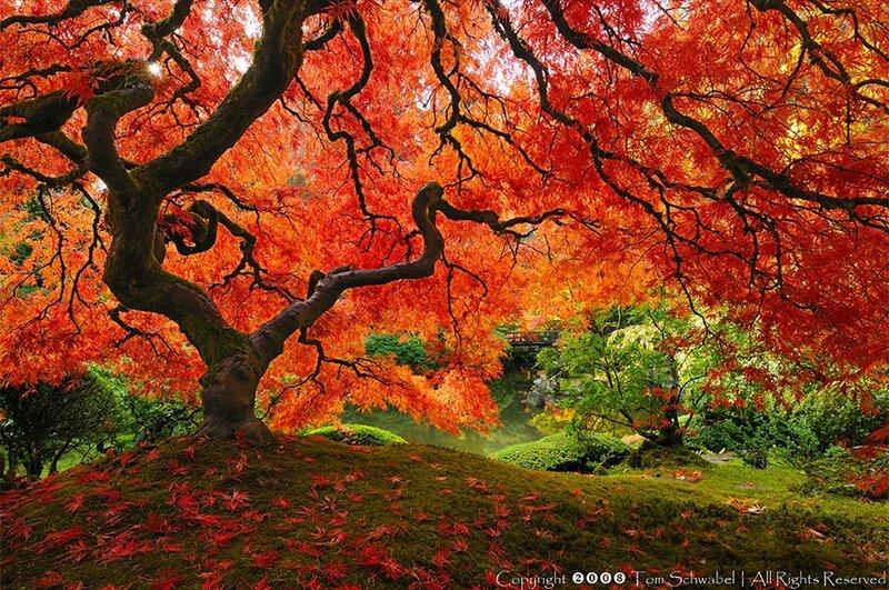 amazing-trees-8-1