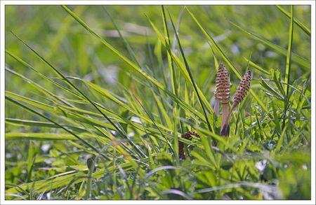 Galuch lulu prele herbe 070412