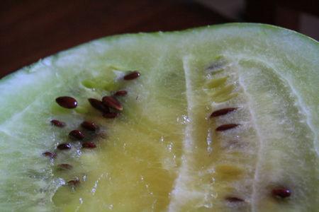 Melon_04