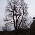 Le tilleul du chateau de bonnemare (27380)