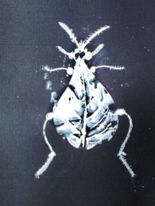 insectRania56