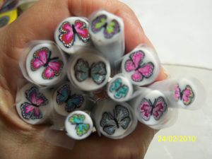 Papillon_020