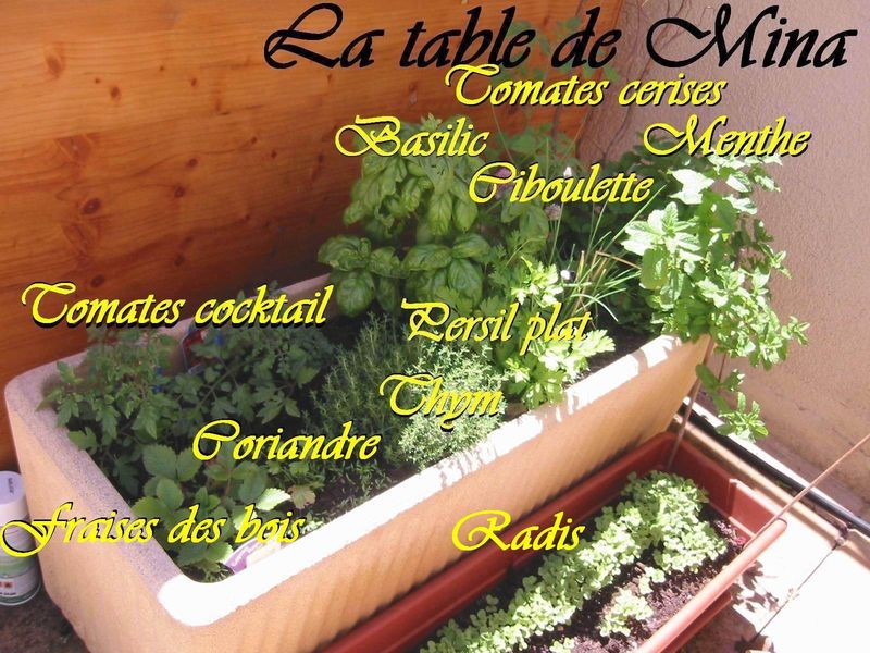 mon jardin potager et herbes aromatiques on ne se moque pas la table de mina. Black Bedroom Furniture Sets. Home Design Ideas