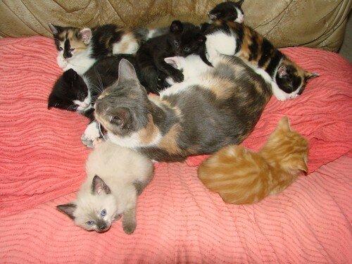 2008 04 18 Papillon avec ses chatons et ceux de Blanco