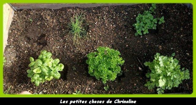petites plantes action