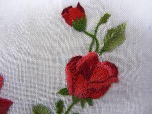 la rosa di Paola (2)
