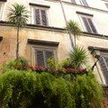 album_rome_balcon_aux_palmiers