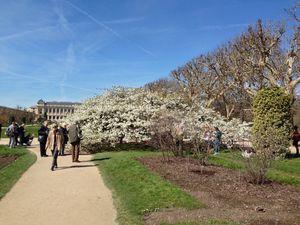 cerisier-engrand