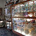 vitrine des coraux