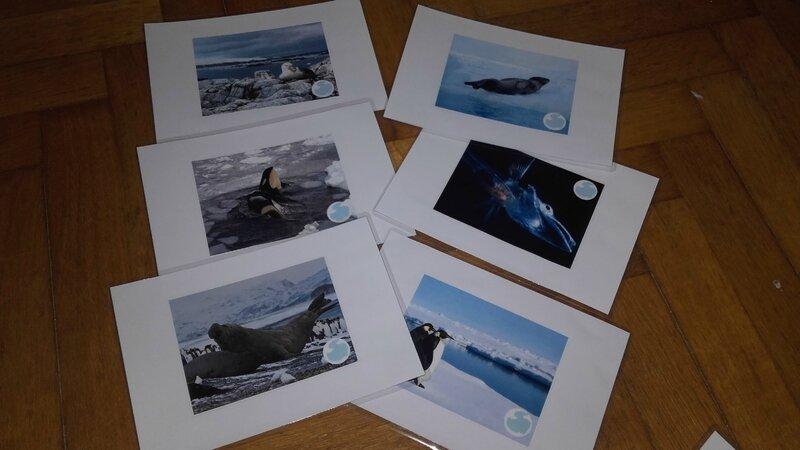 La faune en Antarctique