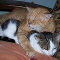 Roux mimi et Petite