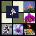 orchidées d' Elie