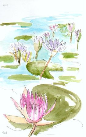 water-lilies-on chobe-river