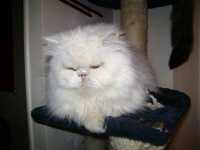 Cléo sur l'arbre à chat