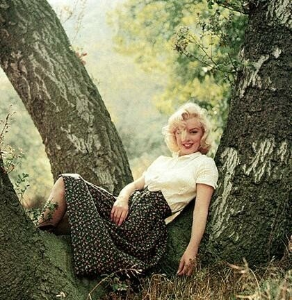 Aj in tree