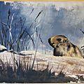 Marmotte Ghislaine Letourneur peinture acrylique