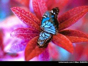 papillon_sur_fleur