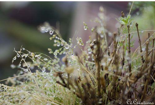 pluie_octobre_2011_3