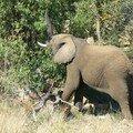 j'adore les éléphants, on sent leur sagesse...