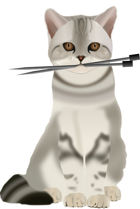 cat-1297689_960_720