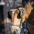 bruges_paard_avond2