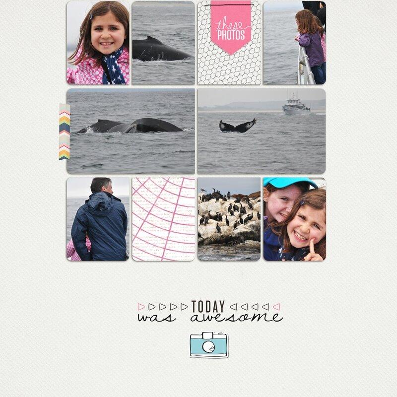 baleines monterey bis