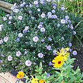 ASTERS 2