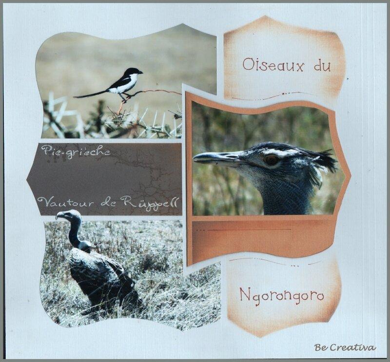 OiseauxDuNgorongoro1