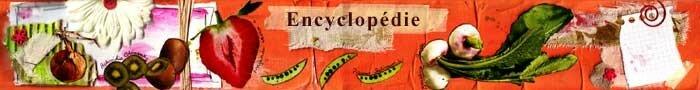 1Banni_re_Encyclop_die