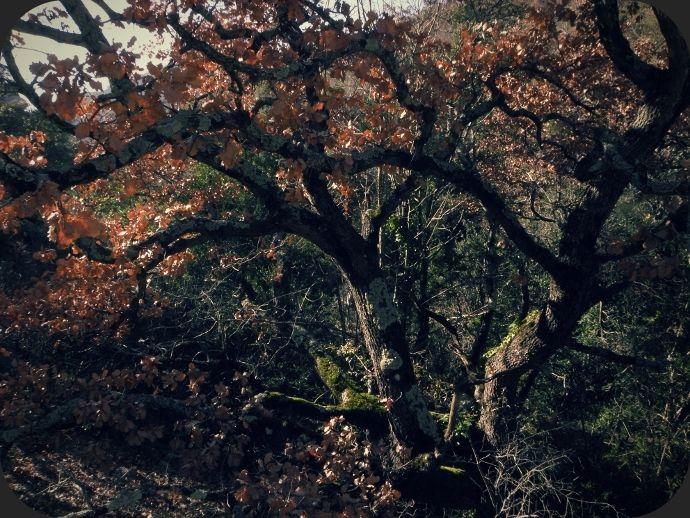 fin_d_automne