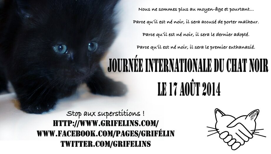 faire adopter son chat
