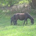maman cheval