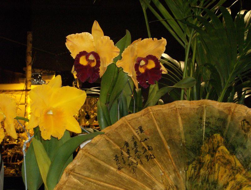 Orchidée expo internationale à Thoune CH
