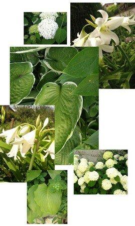 jardin_blanc_et_vert