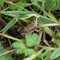 2009 09 20 Une jeune grenouille
