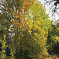 IMG_8954 - t
