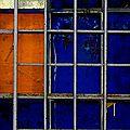 Bleu dans sa cage