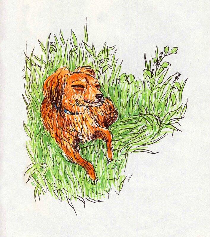 foxy feutre