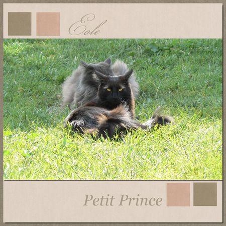 Eole_Petit_Prince_KitBalthazar1