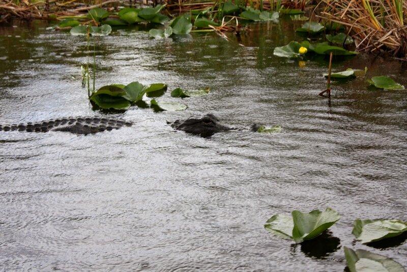 J24 - 21 juillet 2014 Everglades (155).JPG