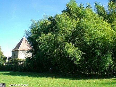 La Bambouseraie du Château d'Ainay-le-Vieil