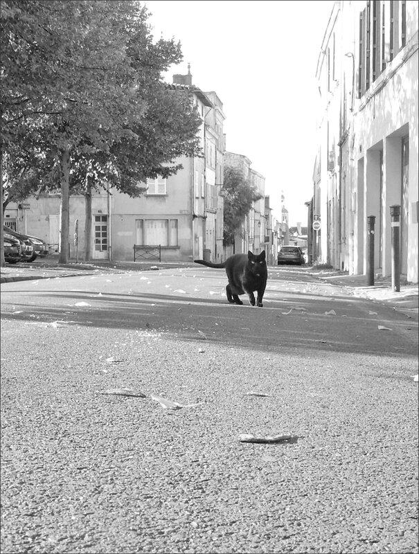 ville panthere noire 1 092015