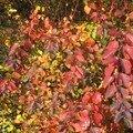 automne025