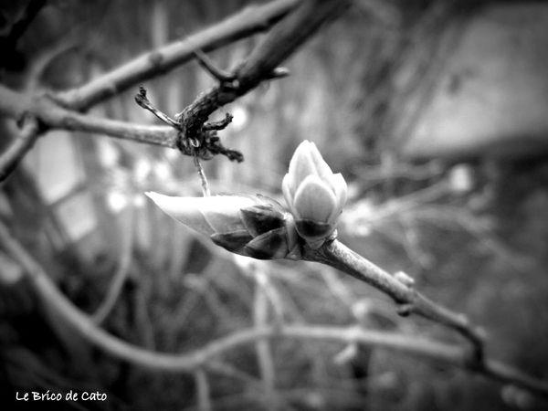 4 Le printemps en macro 4 - Copie