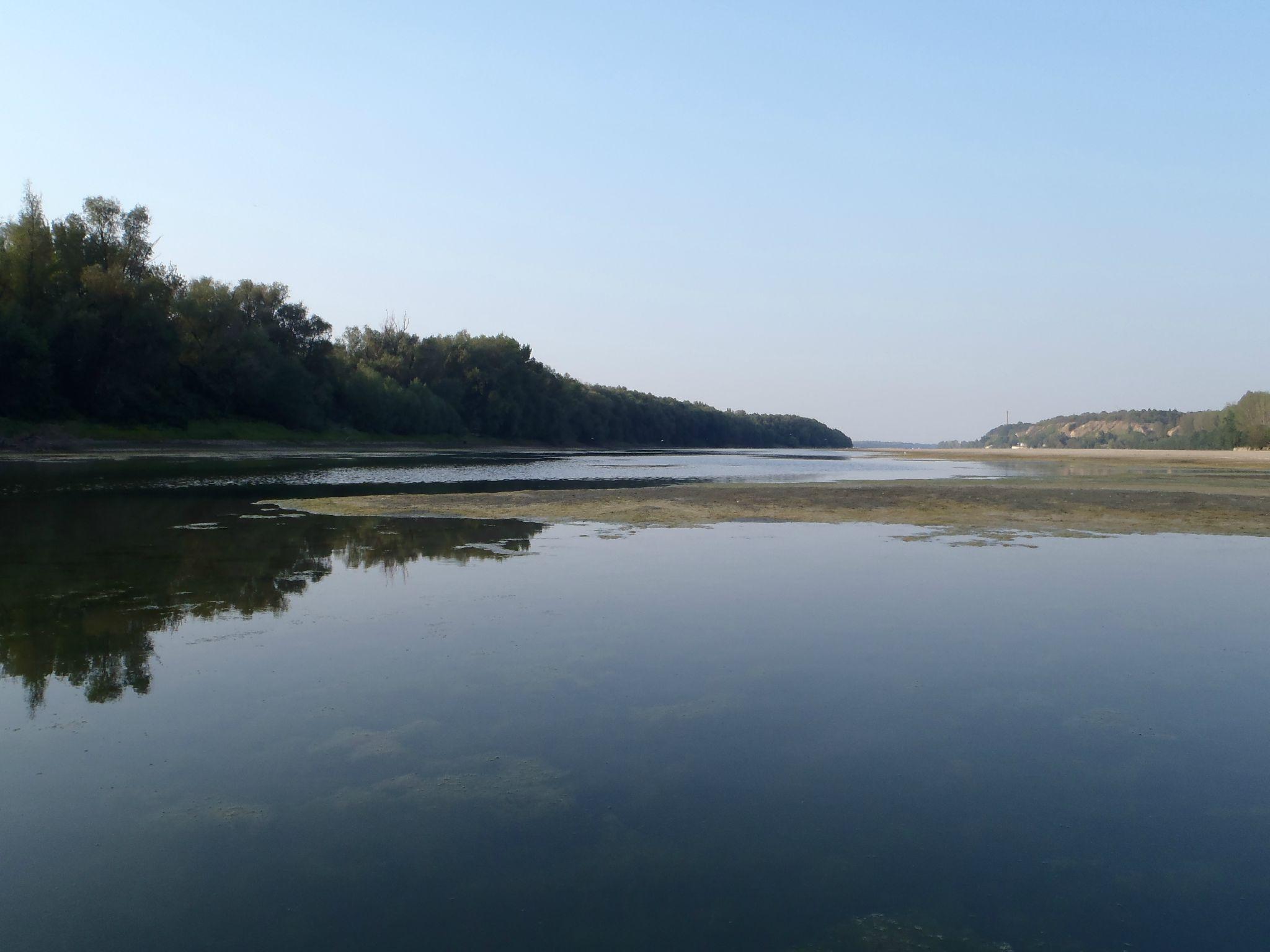 bulgarie - ruse : le danube abrite des milliers d'oiseaux